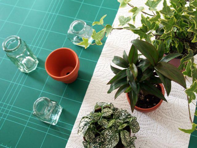 Le choix des plantes - Les Ateliers de Mireia