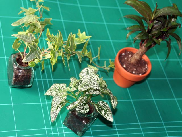 Etape 7 : rempotage des plantes - Les Ateliers de Mireia
