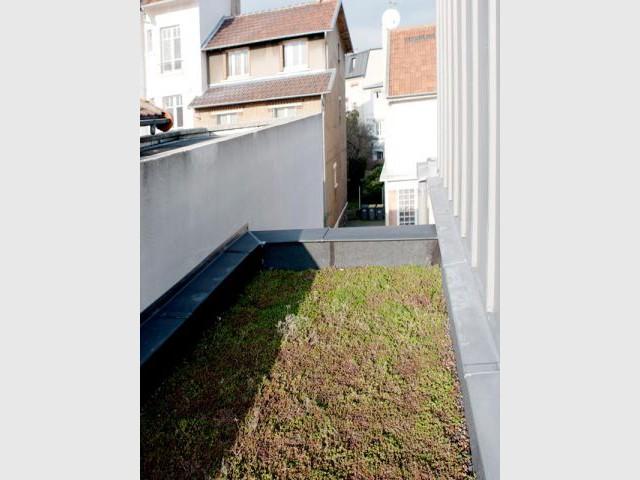 Toiture végétale - Reportage extension Vanves