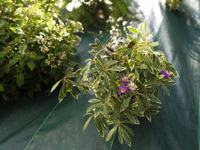 Semer des plantes et légumes résistants - Préparer son jardin au printemps