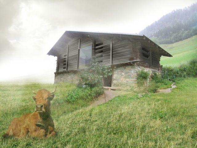Laurier du projet de l'Extension / Rénovation / Réhabilitation - Laurier construction bois
