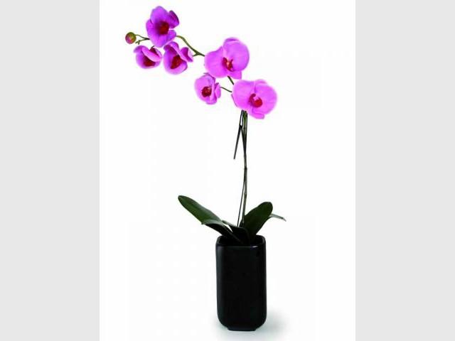 Fleur en tissu - Hervé Gambs