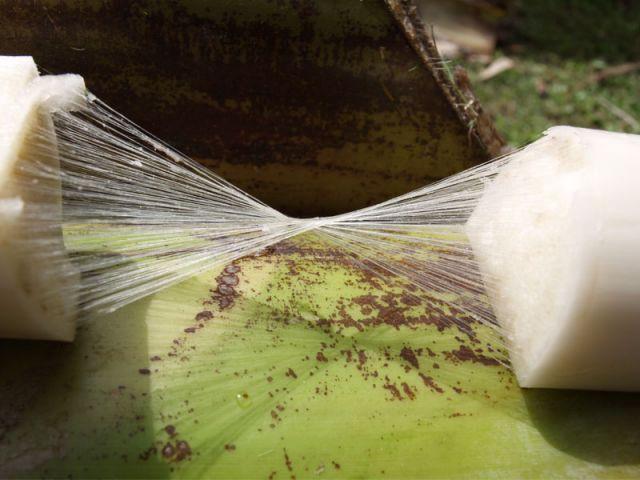 Fibres bananiers - FibandCo