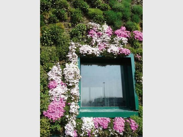 Bien choisir les plantes d'un mur végétal - Architecture végétale