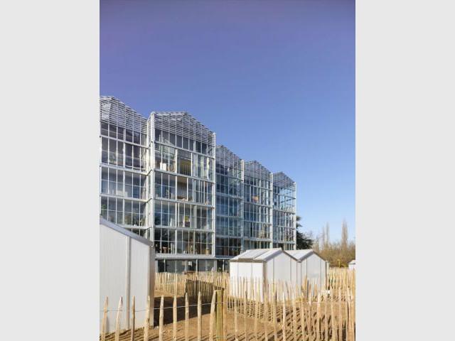 Les maisonnées - Des logements aux allures de serres