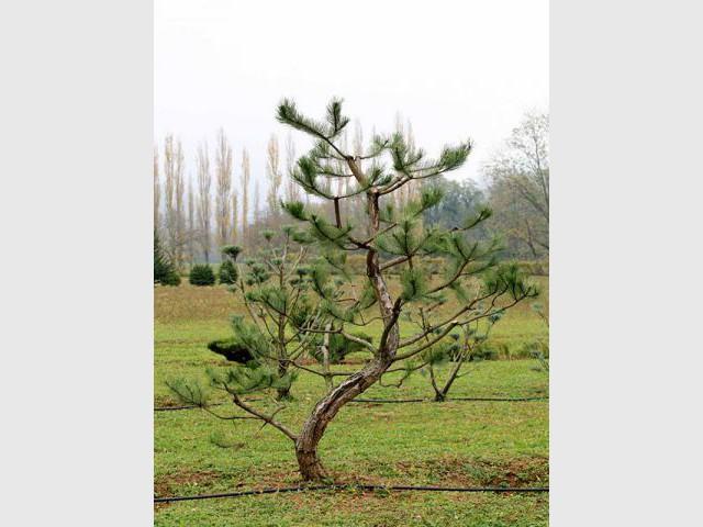 L'entretien des outils - tailler ses arbres