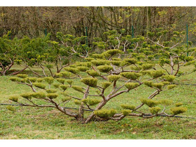 La technique de taille - tailler ses arbres