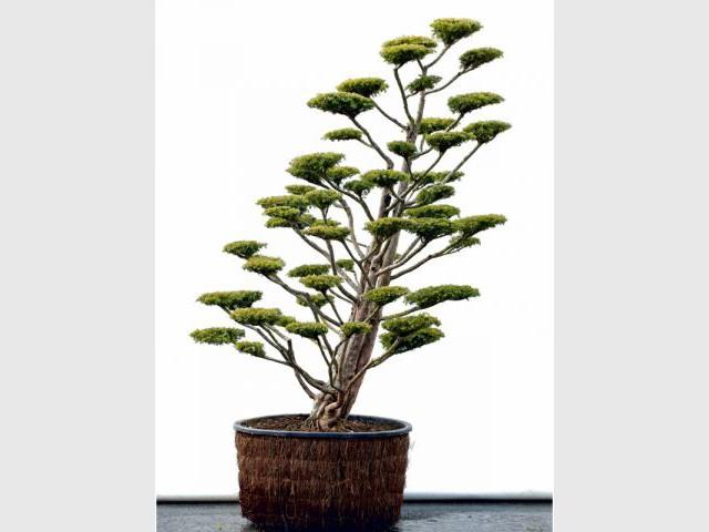 Les masses végétales - tailler ses arbres