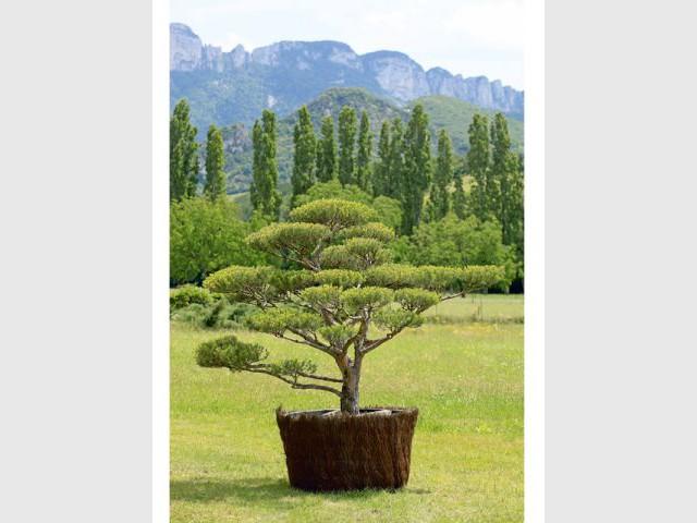 Se former - tailler ses arbres