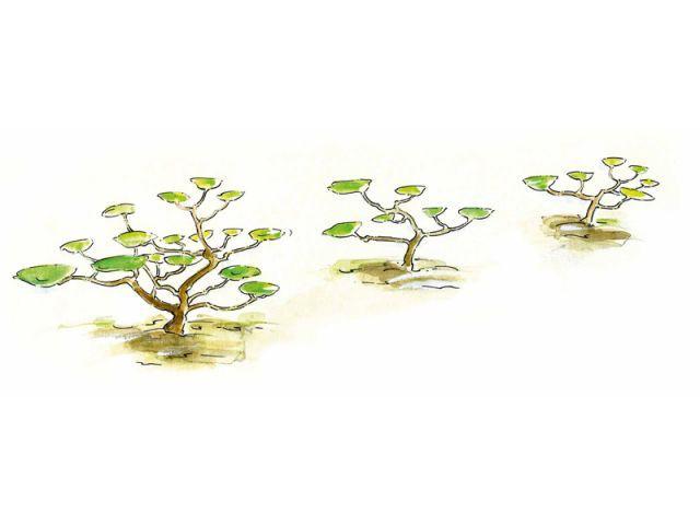 Reproduire la nature - tailler ses arbres