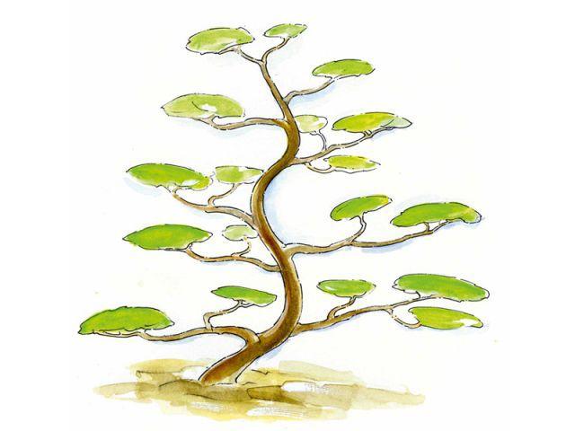 Réveler la structure de l'arbre - tailler ses arbres