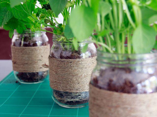 Les plantes - Les Ateliers de Mireia
