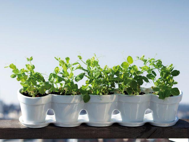 De la lumière, mais pas de soleil - Dix conseils plantes vacances