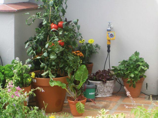 Dix conseils plantes vacances