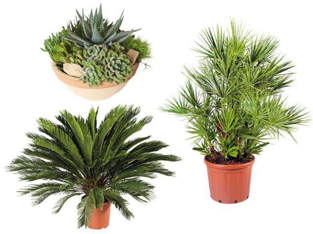 Des plantes faciles à entretenir - Dix conseils plantes vacances