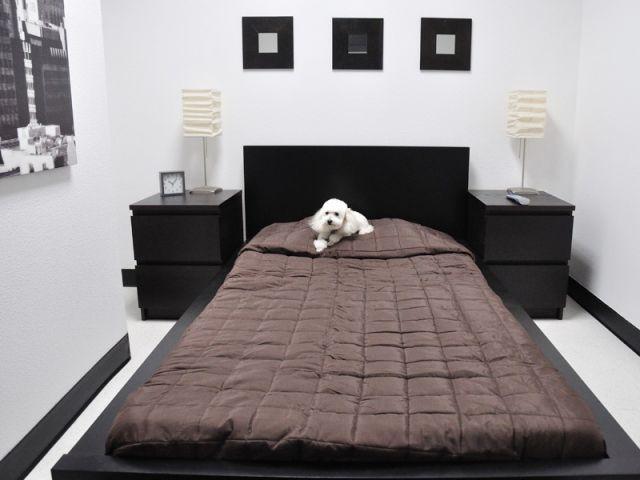 1 h tel de luxe destin aux chiens. Black Bedroom Furniture Sets. Home Design Ideas