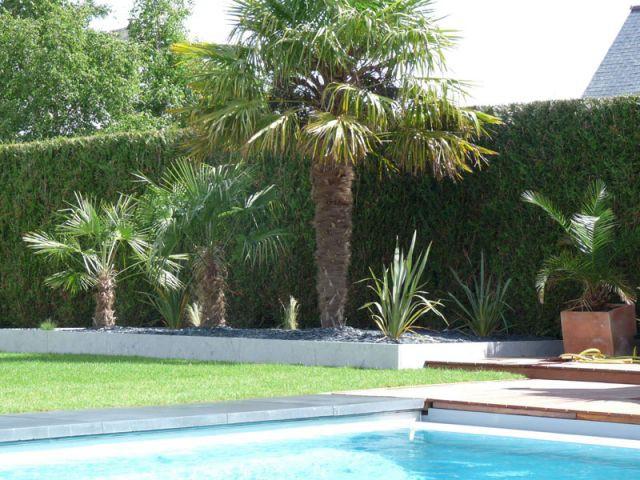 Photo après palmier cardinal jardin Olivier Deniel