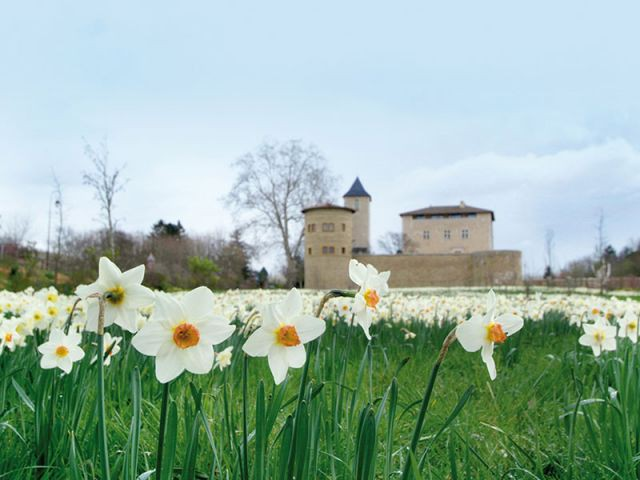 Château Saint Bernard 2 - jardin de l'année 2013