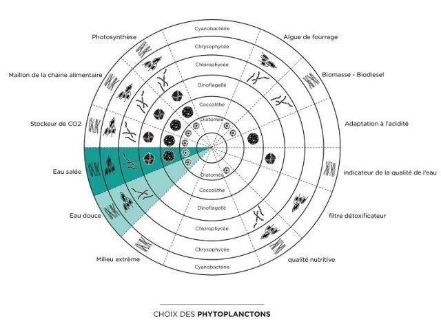 Choix des espèces de phytoplancton - Bloom