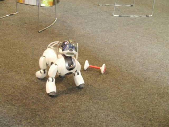 Aibo, le chien-robot - expo Cetelem