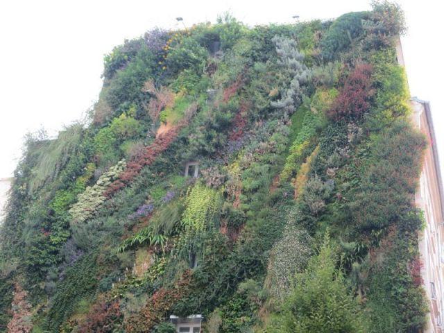De nombreuses espèces - mur végétal