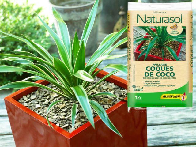 Protéger ses végétaux avec du paillis - Jardin en hiver