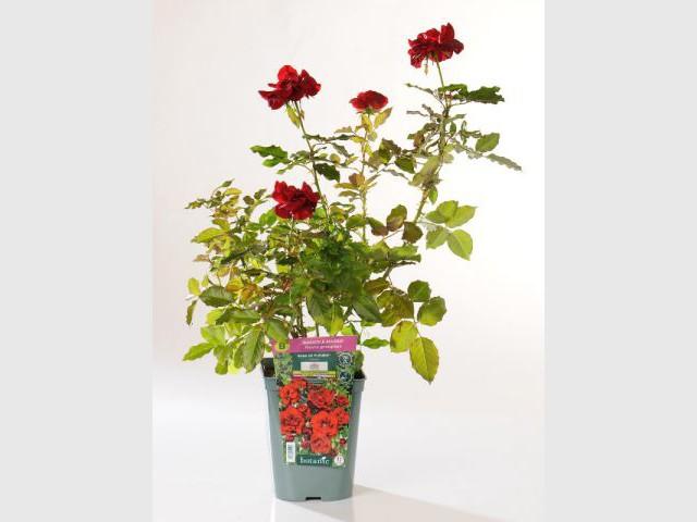 Planter certains végétaux avant le gel - Jardin hiver