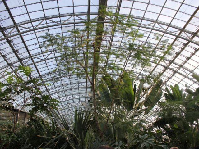Une coupole en acier - Serre tropicale au zoo de Vincennes