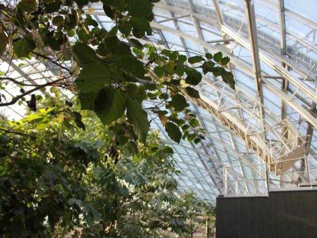 Permettre des objectifs climatiques - Serre tropicale au zoo de Vincennes