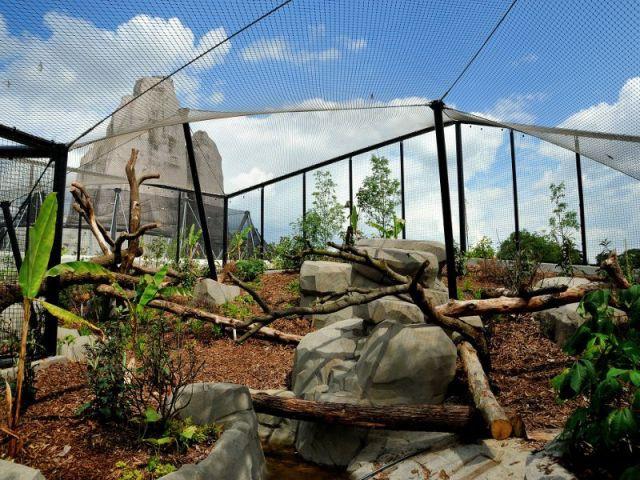 L'enclos des jaguars  - Serre tropicale au zoo de Vincennes