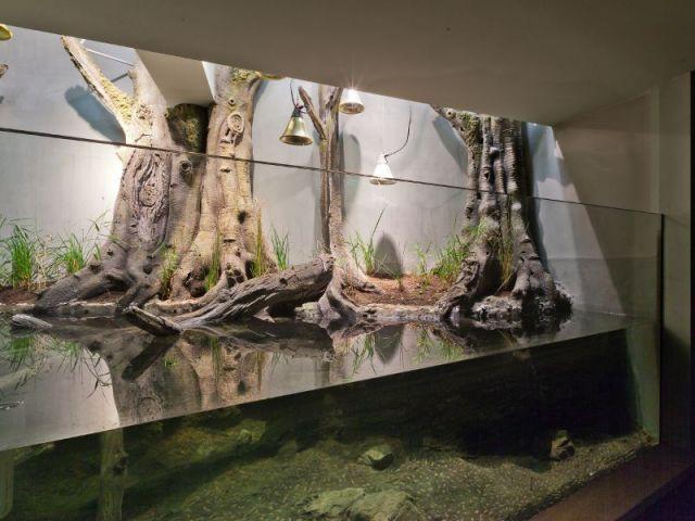Le vivarium  - Serre tropicale au zoo de Vincennes