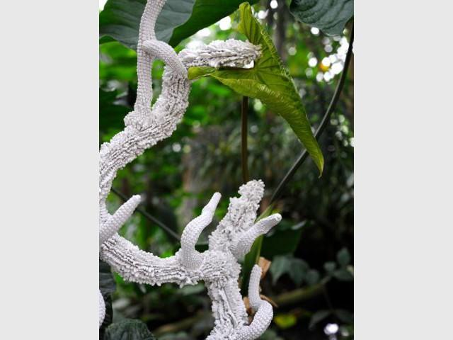 La fin de la frontière entre ciel et terre - Exposition Jardin des Plantes - Noces végétales