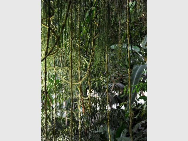 Un trompe l'oeil troublant - Exposition Jardin des Plantes - Noces végétales