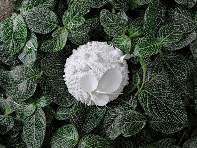 Un contraste saisissant - Exposition Jardin des Plantes - Noces végétales