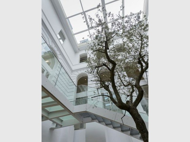 Arbre généalogique planté au cœur du patio - Espace Andrée Chedid