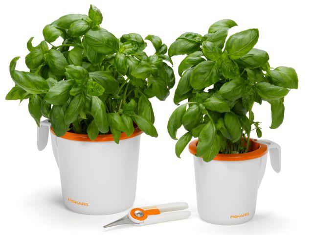 Deux pots à herbes