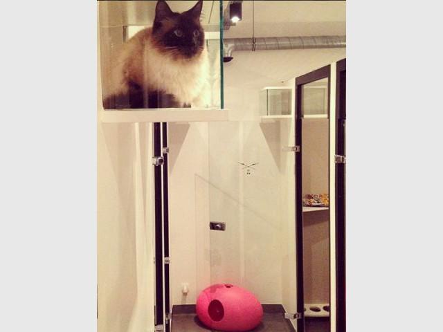 Une architecture adaptée aux besoins des chats - Un hôtel pour les chats