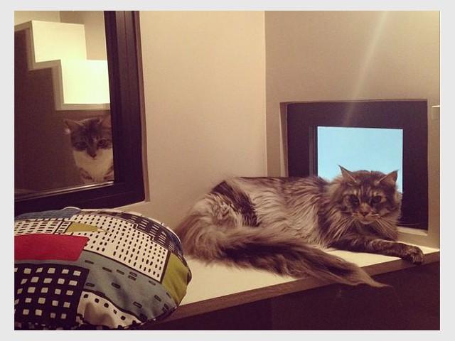 Des chambres qui favorisent la communication - Un hôtel pour les chats