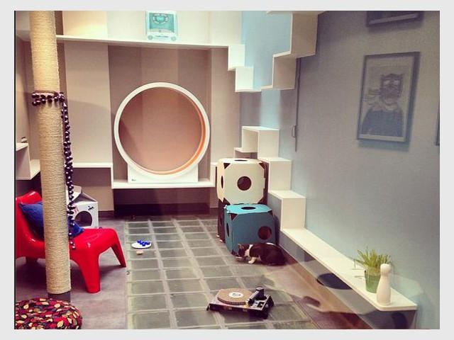 La Playroom : paradis pour chat - Un hôtel pour les chats