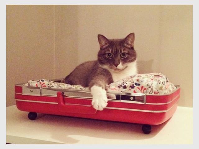 Un hôtel pour les chats