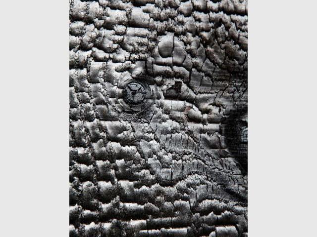 Le bois brûlé : un matériau plein de qualités - Extension en bois brûlé dans le Morbihan