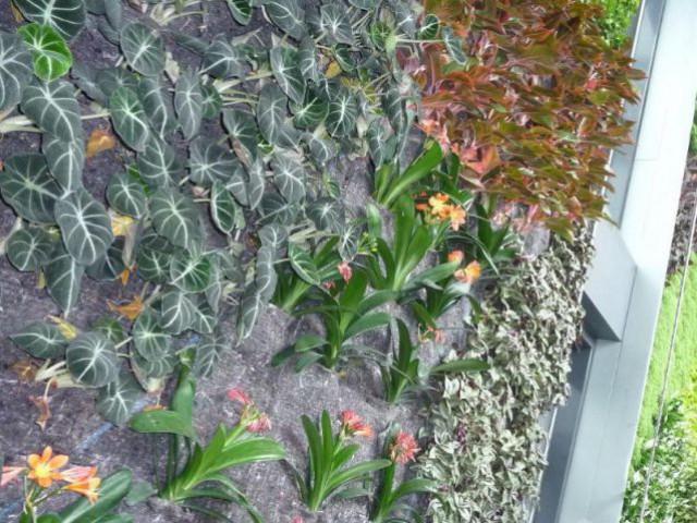 Le mur végétal - Quel revêtement pour la façade de la maison ?