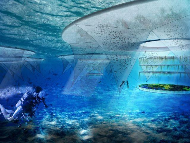 Ocean Hyancinte