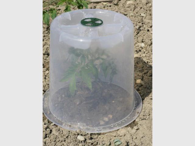 Recouvrir les plantes hivernales d'une cloche transparente pour profiter de leur floraison - Les bons réflexes face au gel