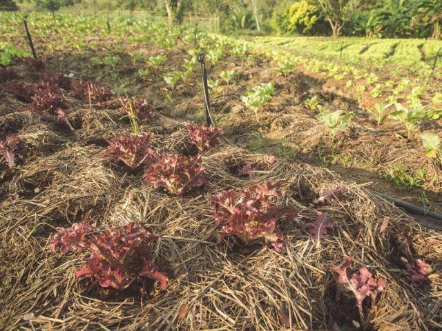 Relever la terre au pied des plantes pour les protéger du froid - Les bons réflexes face au gel