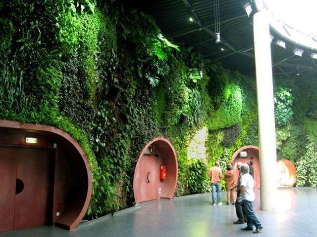 Un long mur végétal pour embellir les salons d'une compagnie aérienne - Patrick Blanc - Le Mur Végétal
