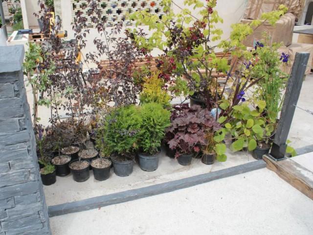 Présence de végétation le long des clôtures - Esprit minéral pour un jardin à part