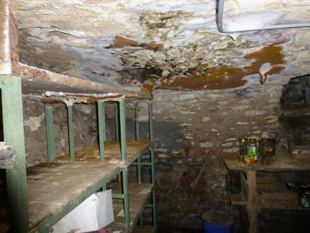 Mrules Champignons Du Bois  Bien Ragir Pour Sauver Sa Maison