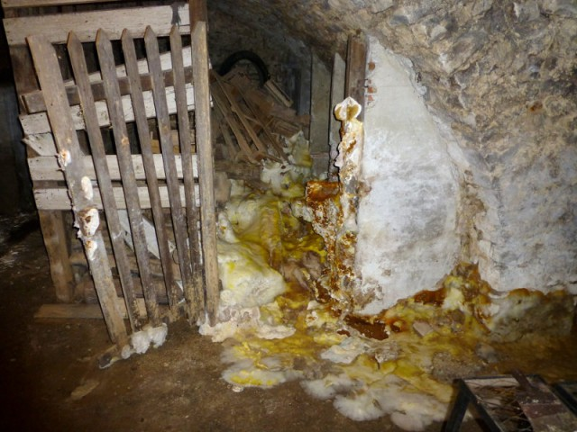 Ne pas attendre pour lancer les travaux de traitement et de réparation - Mérules et parasites du bois