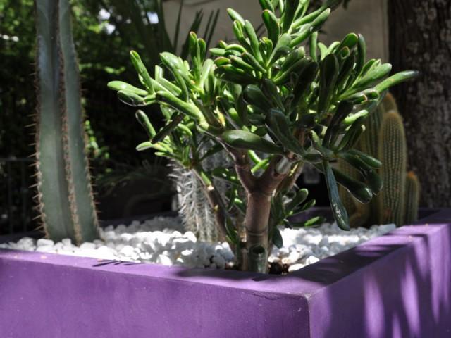 Un bac de fleurs enduit d'un béton ciré violet - Les différentes mises en oeuvre du béton ciré